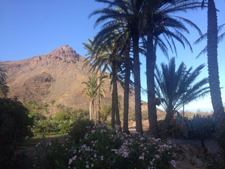 Palmen in der Plantage von el Canrito