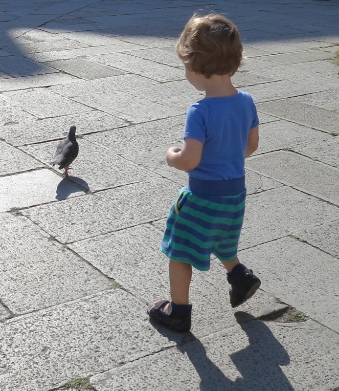 Taubenjagt Venedig