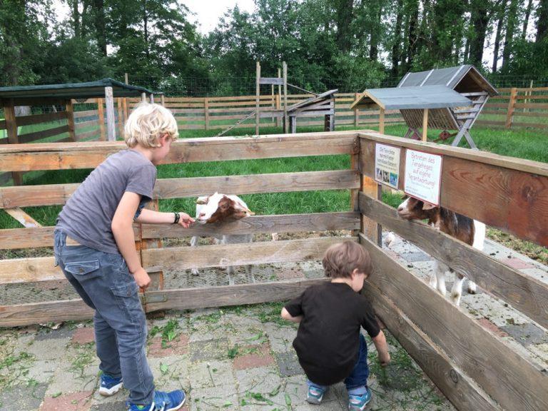 Ziegen füttern im Hofreiter Beerencafé
