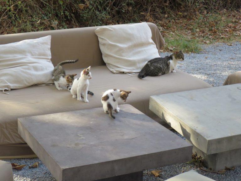 Katzenbaby, Onar, Andros