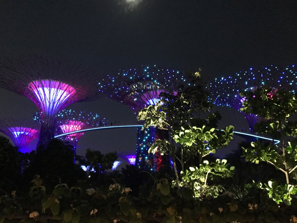 Supertree Grove, Gardens by the Bay